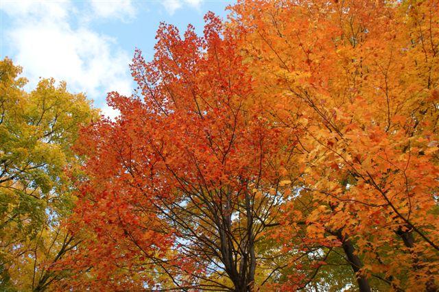 ローレンシャン高原 紅葉